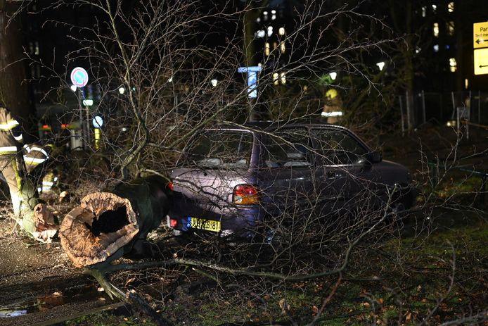 De boom op een auto aan de Theodoor Craanenlaan in Nijmegen.