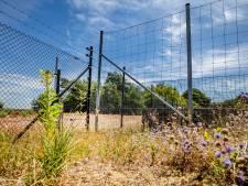 Hoge Veluwe weert wolf met metershoge hekken: 'Nederland is ongeschikt voor dat dier'