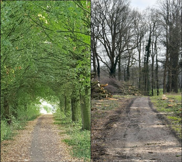 De (verdwenen) 'groene tunnel' aan de Hoge Lutterweg in De Lutte.
