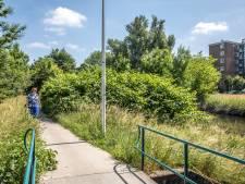 Proef in Zwolle wijst uit: woekerplant met de hand aanpakken, afgraven of elektrocuteren werkt het best