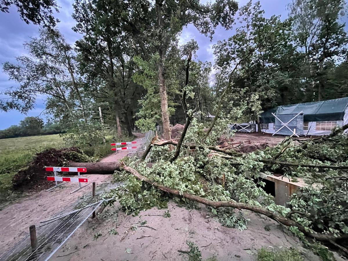 Boom valt op bouwput aan de Broeksteeg in Haaren.
