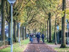 Rechter gaat oordeel vellen over ergernis-eiken Zwolle