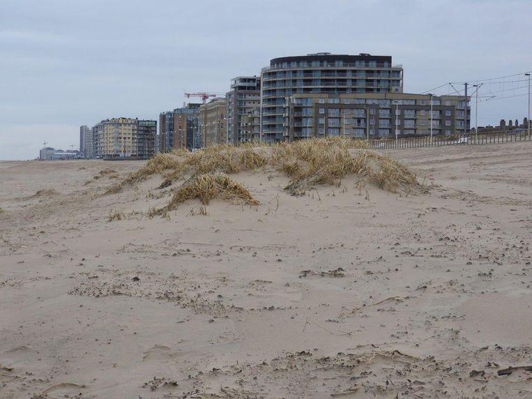 Zo zagen de embryonale duinen eruit voordat het grondwerkenbedrijf het strand nivelleerde.