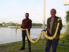 Vrienden vissen dode slang van vier meter uit kanaal: 'Dacht dat het stuk speelgoed was'