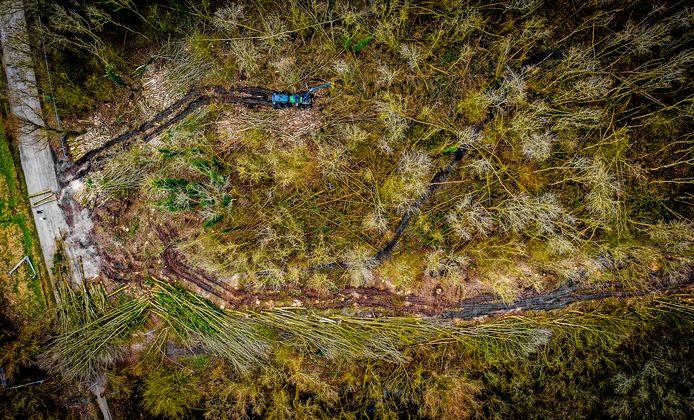 Eerder werden er ruim duizend bomen gekapt om plaats te maken voor het windmolenpark.