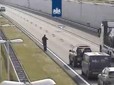 'Dat is schrikken': Zwaan gebruikt A4 bij Delft als 'startbaan' naar Den Haag
