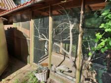 Al jaren kwetteren vinkjes en kanaries erop los in tuin van Aartje (83) en Henk (84); maar toen waren ze plots gestolen