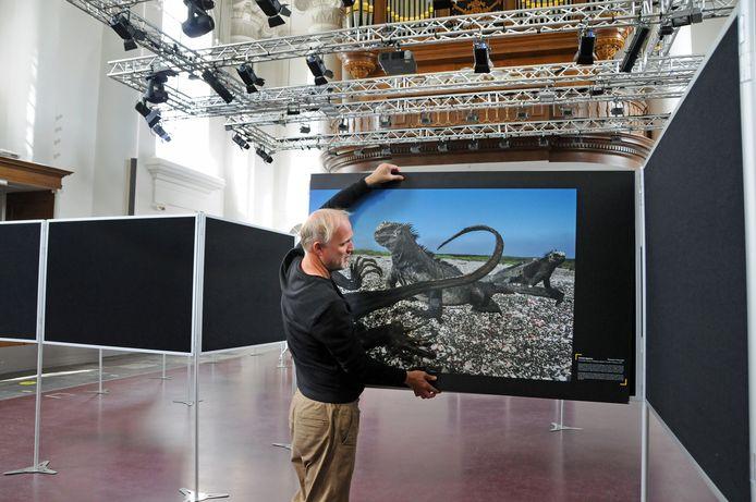 Marcel Kollen richt de tentoonstelling van National Geographic in op de panelen in de Nieuwe Kerk in Zierikzee. Op de foto de kanibaliserende leguanen.