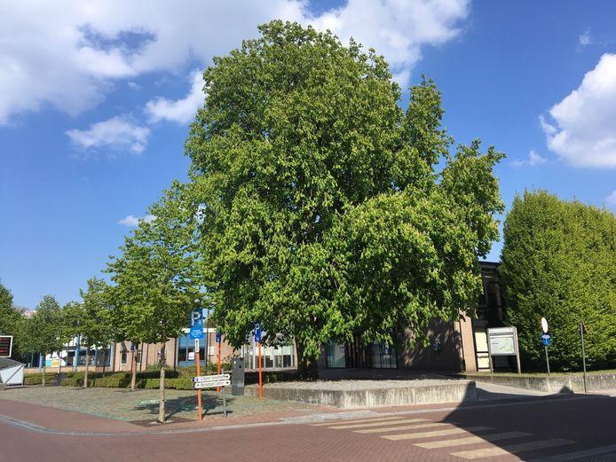 De grote kastanjeboom aan het gemeentehuis van Vosselaar.