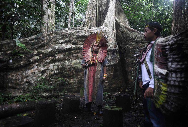 Spirituele leiders van de Braziliaanse Huni Kui-stam tijdens een ceremonie voor een heilige boom.  Beeld REUTERS