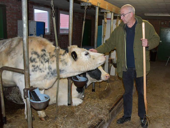 Doortje (voorste koe) en Paula weten het nog niet, maar ze gaan over een tijdje verhuizen. De dieren zijn heel belangrijk voor de kinderen die zorgboerderij Binnenste Buiten bezoeken, vertelt Jan Kees van Gaalen.