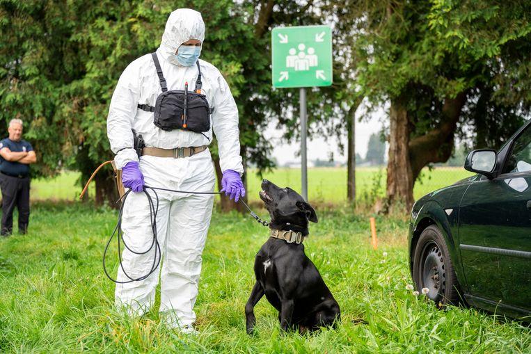 Zennah is de eerste zedenhond van België. 'Ze kan op een heel groot gebied de exacte locatie van sperma aanduiden, zelfs tot weken na de feiten', zegt woordvoerder An Berger. Beeld Federal Police