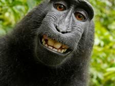 L'humain gagne dans l'affaire du selfie du macaque