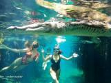 Fotograaf heeft geen schrik van krokodil en maakt deze verbluffende beelden