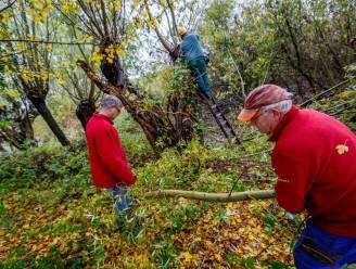 Vrijwilligerswerk verkleint risico op dementie