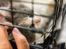 L'adoption d'animaux autorisée pendant le confinement en France