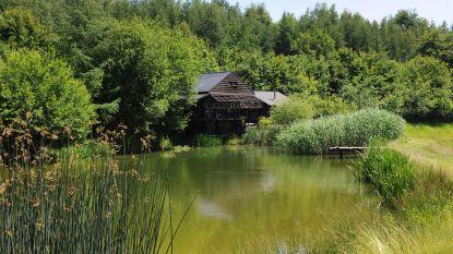 Françoise verbouwde vervallen vissershut  tot charmante cabane in het groen
