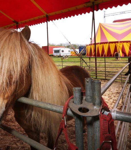 Circus in Bergen op Zoom zamelt geld in voor Limburg: 'We weten hoe het is om in nood te zitten'