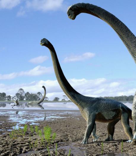 L'Université de Liège révèle que les dinosaures pouvaient aussi être atteints du cancer