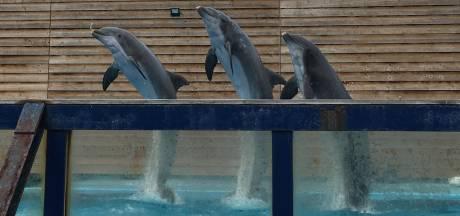 Acht dolfijnen en walrussen vertrekken uit Dolfinarium: 'Het is verdrietig'