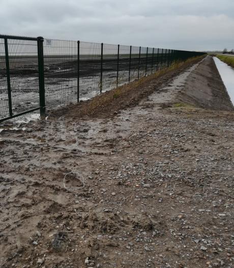 Groenstrook zonnepark Ceresweg bij Tholen wordt niet breder dan 3,5 meter