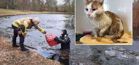 Dierenasiel staat voor mysterie bij kat die dagenlang overleefde op eiland in Zwolle