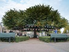 Etten-Leur is trots op haar Boom van het Jaar: 'Heel veel mensen hebben plezier van de Moeierboom'