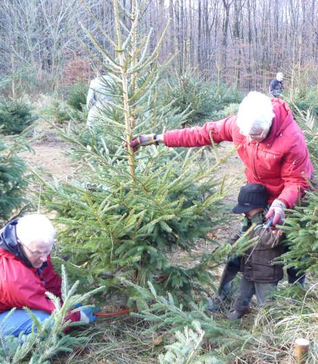 Boswachters 'transplanteren' kerstbomen in Kuinderbos