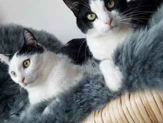 Drie dierenasielen in Hamme krijgen financiële ondersteuning van Vlaamse regering