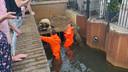Brandweer redt eendjes achter rooster in Veldhoven.