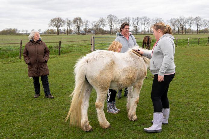 Rika Lassche (l) met de familie De Weerd uit Staphorst die recent de open dag van 't Olde Manegepeerd bezocht. Rijna (m) en Alina (r) borstelen het paard terwijl moeder Henriët toekijkt.