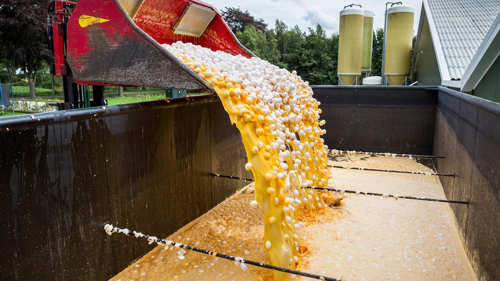 Omdat in de eieren de verboden stof fipronil werd gevonden, moesten miljoenen eieren worden teruggeroepen en vernietigd.