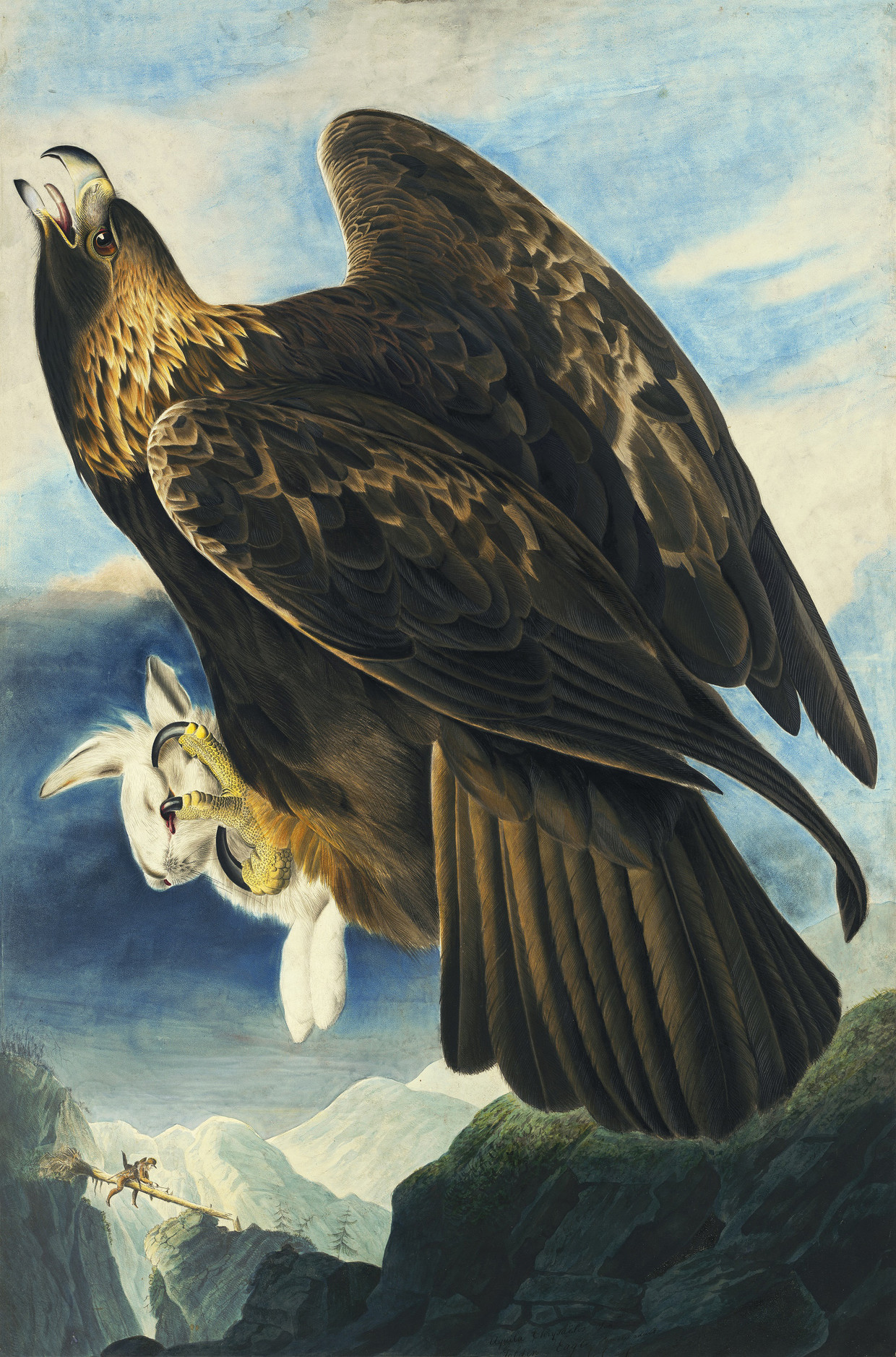 Steenarend door J.J. Audubon, 1833, Aquarel   Beeld Met dank aan The New York Historical Society, digital image created by Oppenheimer Editions