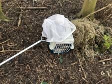 Konijntjes gedumpt in natuurgebied Broekpolder: 'Overlevingskans in het bos is zo goed als nihil'