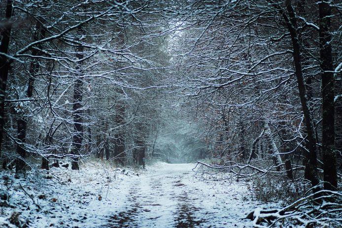 In het bos bij Hoenderloo maak je dit soort mooie plaatjes.