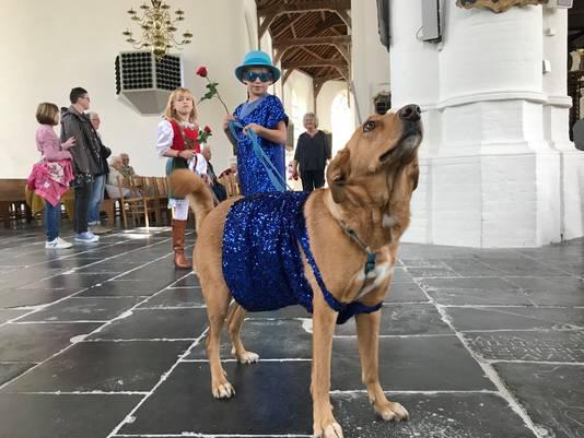 Een niet alledaags gezicht: een parade van honden in de kerk.