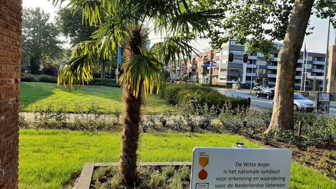 Wit anjerperkje in Nijverdal als blijk van waardering voor Nederlandse veteranen