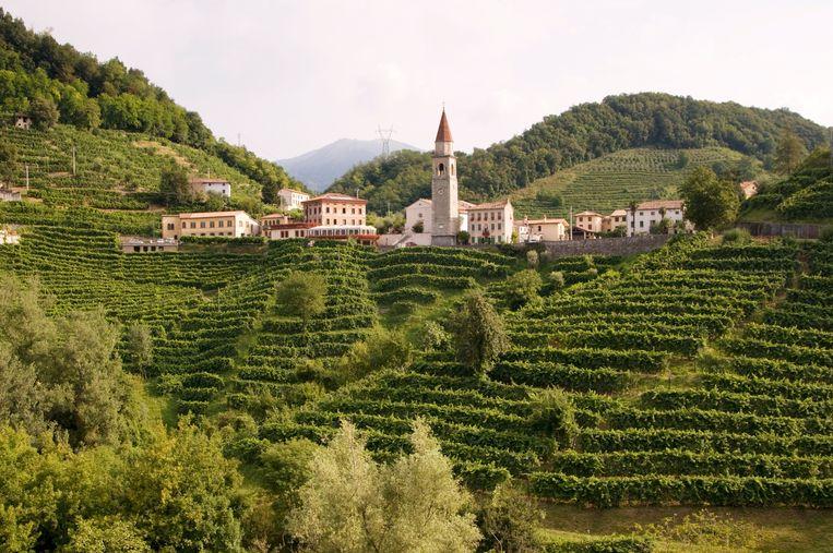 Prosecco-wijngaarden in Noord-Italië. Beeld © Aldo Pavan