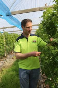 Fruitteler in Nuenen baalt: zijn 'fraai ogende' doorzichtige zonnepalen dreigen te sneuvelen