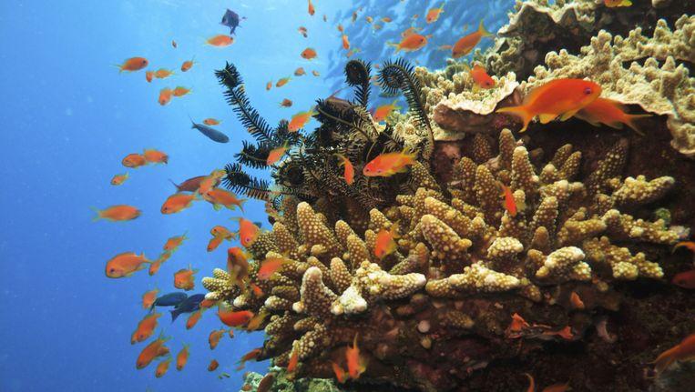 Het Great Barrier Reef in Australië. Beeld THINKSTOCK