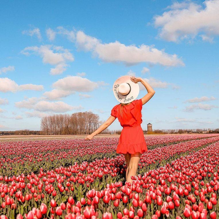 Niets mooier dan een veld vol tulpen voor een foto op sociale media.