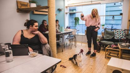 Studenten blokken in kattencafé