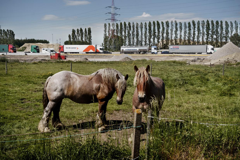 Een weiland in Zwijndrecht met op de achtergrond de Oosterweel-werken. Beeld © Eric de Mildt