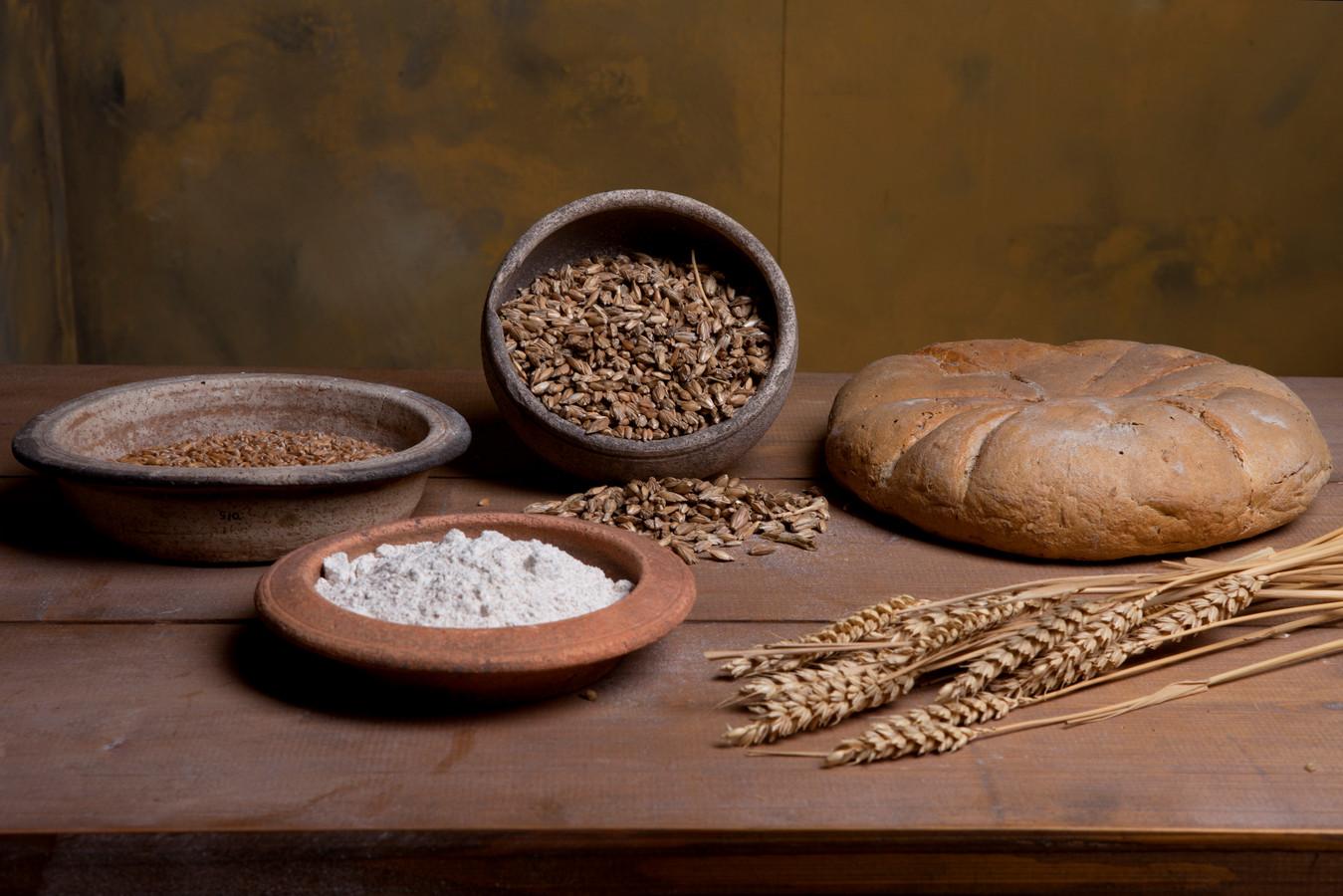 Romeins brood werd gemaakt van spelttarwe (in de staande kom nog in het kaf) en van broodtarwe (aren op de voorgrond).