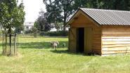 Nieuw onderkomen voor schapen in park Hemelrijk