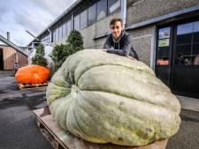 """Jens (18) kweekt zwaarste groene pompoen van Europa: """"Ik zal er geen soep mee maken, maar heb al een ander ideetje"""""""
