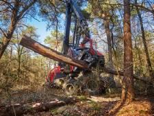 Oranje stip op de basten kondigde hun lot al aan: massale bomenkap in Heeswijkse bossen, voor een beter bos