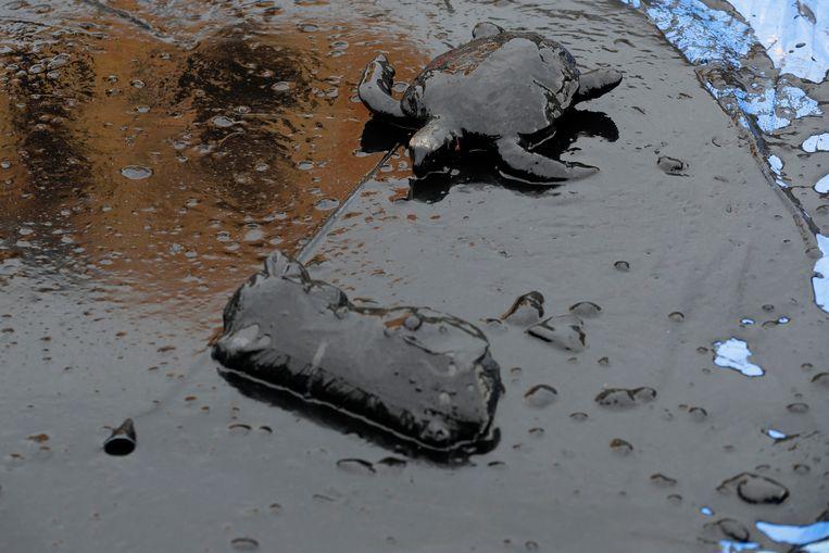 Een schildpad ligt in een plas olie. Beeld AP