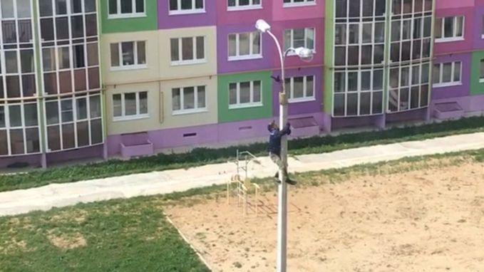 Man redt vogel uit verlichtingspaal