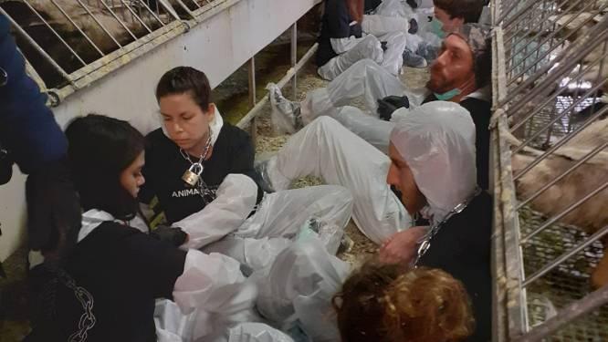 Animal Resistance bezet eendenboerderij in Bekegem: 50 activisten ketenen en lijmen zich vast in stal